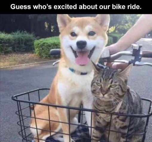 dog-cat-guess-whos-excited-about-bike-rid.jpg